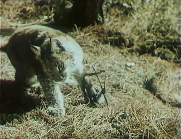 Тропой бескорыстной любви [1971, семейный, фильмы о животных]