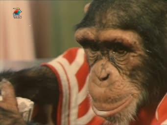 Украли зебру [1971, детский, семейный, комедия, приключения, фильмы с животными]